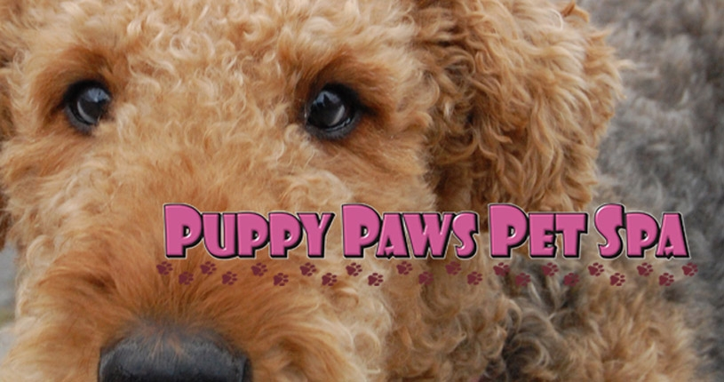 Puppy Paws Pet Spa